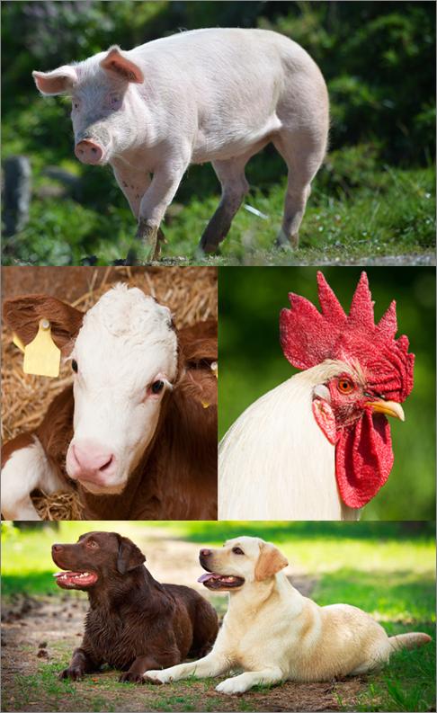 Immagine animali